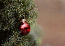 Пункт приема новогодних елок откроется в Пущино