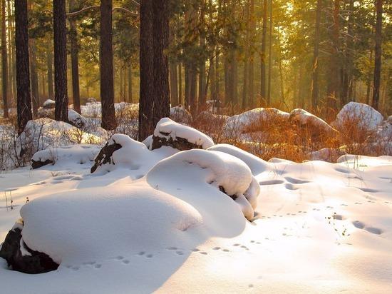 В охотугодьях Марий Эл начинается зимний учет зверей