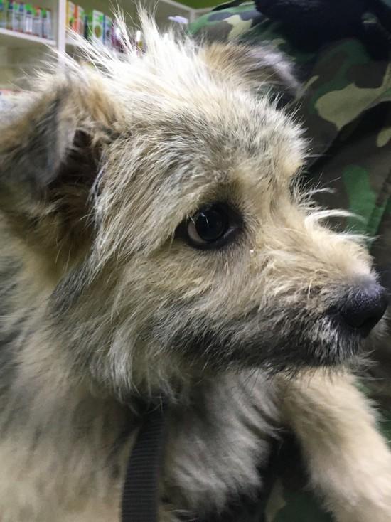 Судьба собаки, брошенной на трассе, взволновала множество жителей в Смоленской области