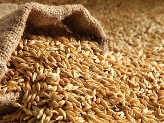В совхозе «Алексеевский» научились бережно убирать зерновые культуры