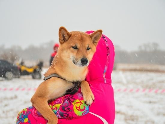 Погода в Рязанской области 14 января