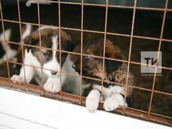 Собак из Дагестана доставили в аксубаевский приют для животных