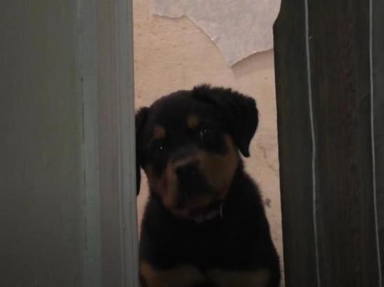 Выкинувшего щенка из окна жителя Находки осудили
