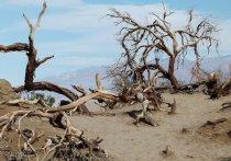 Международная группа ученых предупредила, что мир находится на пути к «ужасному будущему» – и дело даже не в пандемии коронавируса,  а в том, что ускоряющееся изменение климата и утрата биоразнообразия угрожают выживанию всех видов на планете, если мировые лидеры не примут срочных мер