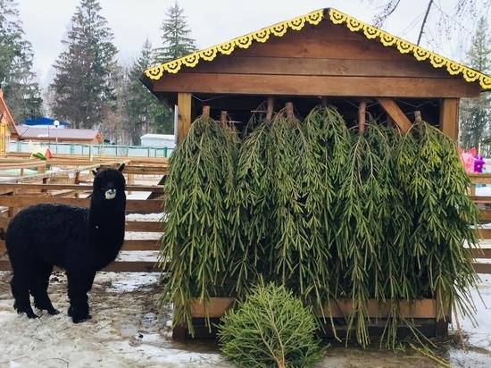 В Чебоксарах вновь запустил акцию по сбору елок для животных