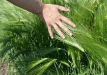 Минсельхоз и сельхозпроизводители Ставропольского края изучают нюансы  биологизированного земледелия