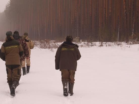 Численность медведей и лосей выросла в Нижегородской области