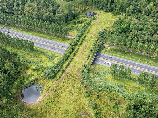 В Чувашии экотоннели на трассе М-12 позволят безопасно передвигаться диким животным