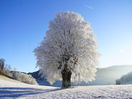 Чего лучше избегать 17 января, в предпразднество Богоявления