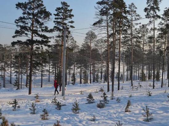 В Улан-Удэ младшие школьники поломали в городском парке саженцы елочек