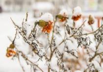 Всемирный день снега 2021 прошел в Хабаровске бесснежно