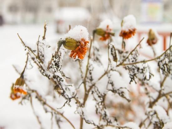 Уникальные бизнес-идеи и животная радость - о том, что уже принесла хабаровчанам малоснежная зима, в подборке «МК в Хабаровске»