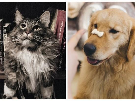 Европейские ученые смогли доказать, что кошки умнее собак