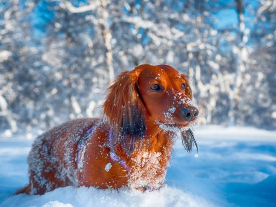 Крещенский морозец: погода в Новосибирске на 19 января