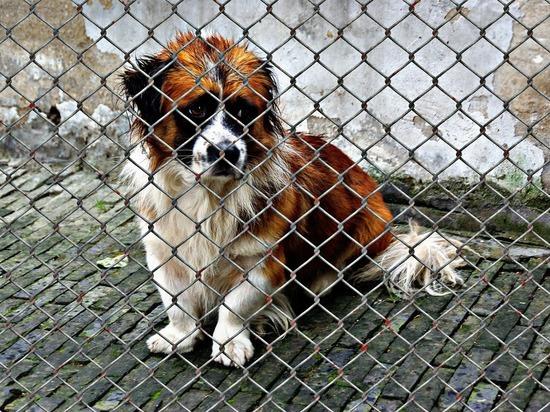 Чите выделили почти 9 млн рублей на содержание бездомных животных