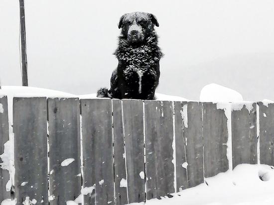 «Собачий вопрос» в Улан-Удэ стоит на повестке дня второй месяц подряд