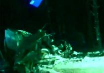 Водитель большегруза «Скании» рассказал подробности аварии на 72-м км Горьковского шоссе, в результате которой погибли три человека и шестеро пострадали
