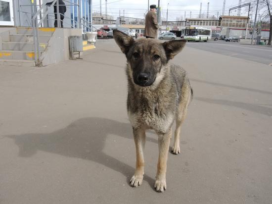 Россиян предложили штрафовать за выброшенных котов и собак