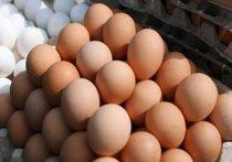 В декабре 2020 года в Омской области больше всего подорожали яйца