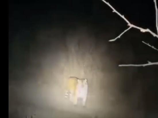 Амурский тигр загнал охотников на дерево