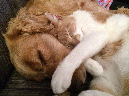 О высокой температуре у кошек и собак расскажут горячие уши