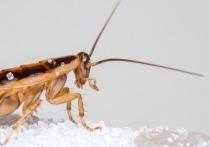 В феврале Москву ожидает нашествие тараканов