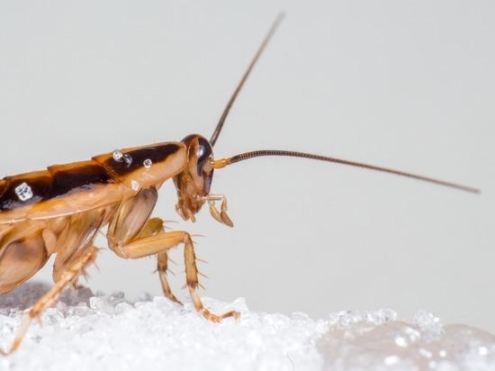 В феврале Москву ожидает «массовое разведение тараканов», предупредили в Роспотребнадзоре