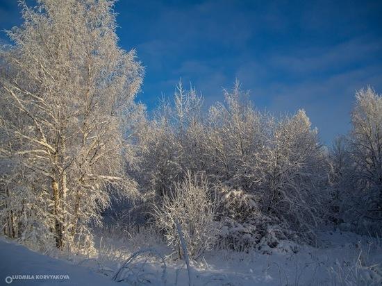 20 января: главные новости дня по версии «МК в Карелии»