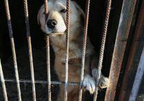 В проверенном по поручению Сергея Кузнецова скандальном подворье для животных не нашли нарушений