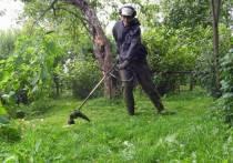 Под запрет могут попасть газонокосилки и триммеры для травы в крупных городах