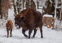 Вход на территорию Приокско-Террасного заповедника станет платным