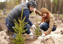 Пятилетка под знаком сосны: Тверская область модернизирует древесный драйвер своей экономики