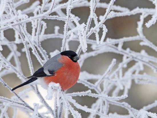 Погода в Новосибирске 22 января: холодно и снежно