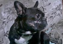 Ветеринары Забайкалья спасли собаку после выстрела в голову