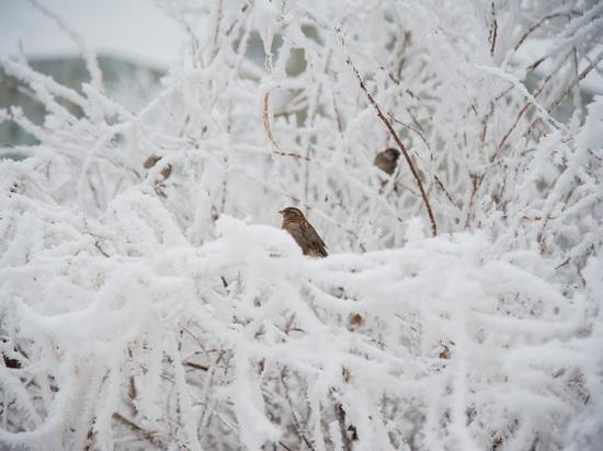 Волгоградцев в конце недели ожидает мокрый снег при +2 °С
