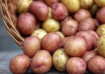 Производители картофеля предложил крупнейшим российским торговым сетям продавать картофель «эконом-класса», который имеет меньшие размеры и дешевле обычного на 15-20%