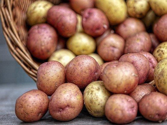 Корнеплод отличается меньшими размерами и ценой