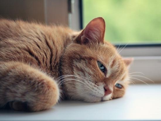 На дне рождении кошки 15 человек заразились коронавирусом