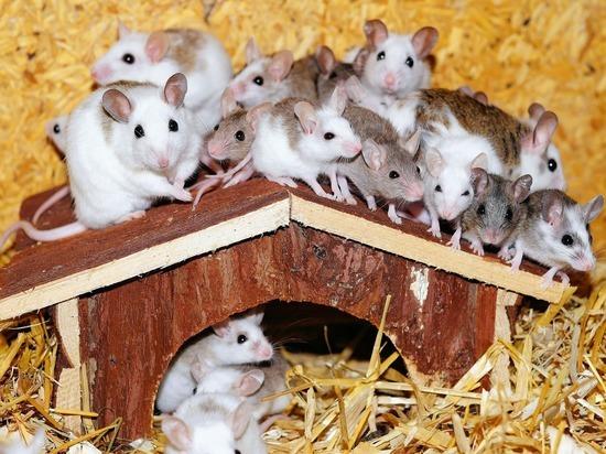 Ученые успешно испытали на мышах метод лечения паралича