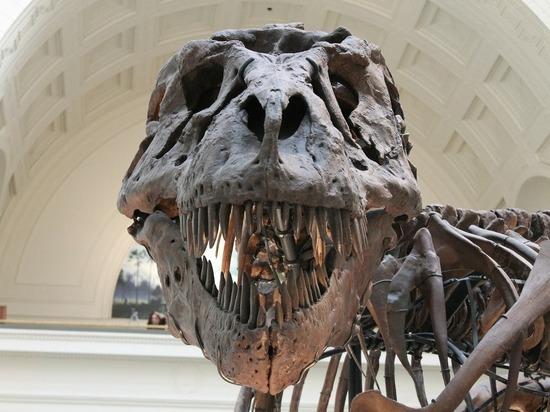 Останки самого крупного динозавра в истории нашли в Аргентине