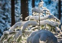 В Удмуртии 23 января местами ожидается небольшой снег