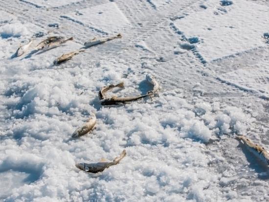 Провалившийся под лёд тверской рыбак выжил благодаря очевидцам