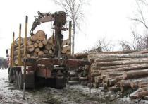 По данным «Рослесинфорга», объем незаконной вырубки в 2020 г. составил 6,3 куб. м на каждую 1000 га.