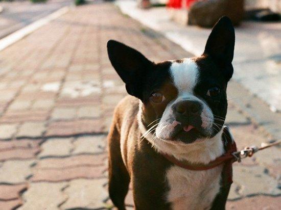 Эксперты: кошки и собаки могут заражаться и передавать COVID-19 людям