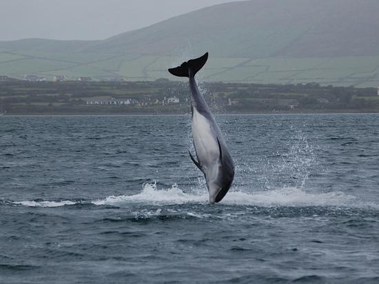 Ирландский сенатор обвинил Путина в пропаже знаменитого дельфина Фунги
