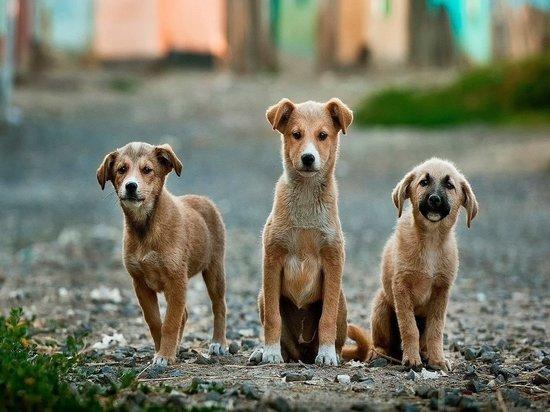 Дума предлагает ввести в КоАП конфискацию животных за жестокое обращение