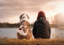 Американские ученые выдвинули предположение, что женщины приняли большее участие в одомашнивании собак, чем мужчины.