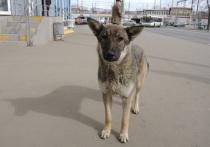 На Украине спасли детей, которых мать кормила собаками