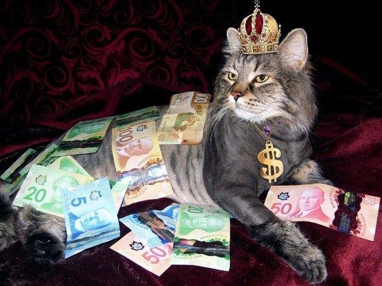 Сколько денег нужно для счастья жителям Рязани