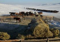 Агропромышленный комплекс Тувы состоит сегодня из 175 сельхозорганизаций,1081 крестьянских (фермерских) хозяйств и индивидуальных предпринимателей, а также более  22 тысяч личных подсобных хозяйств